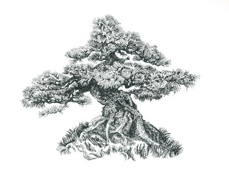 Small conifer bonsai.Tree on the hill.Black and white drawing. Illustration of a small bonsai. 版權商用圖片