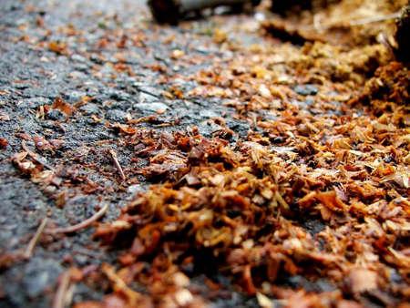 sawdust texture photo