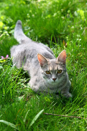cat on green grass Stock Photo - 2888752