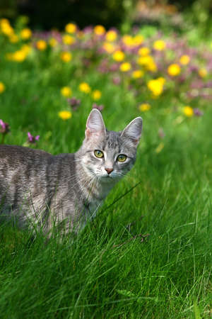 cat on green grass and flower Stock Photo - 2888751