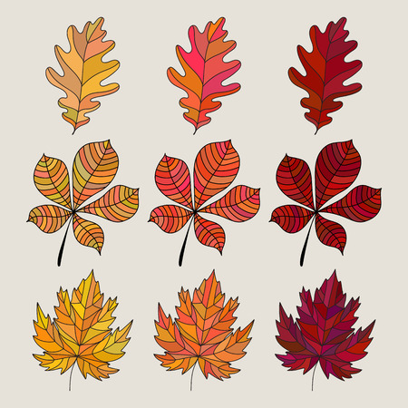 dying: Set of colorful autumn leaves. Vector illustration. Fall leaves color gradient. 3 kind different colored leaves. Oak, maple and chestnut trees leaf icon. Illustration