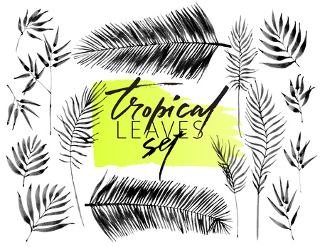 Set of tropical leaves, hand drawn ink brush images isolated on white background. Vector illustration. Floral elements for design. Palm leaves. Vectores