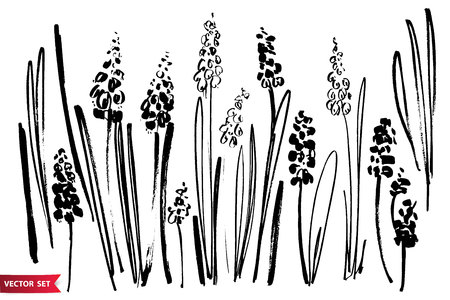 Vector set of ink drawing hyacinths, herbs and flowers, monochrome artistic botanical illustration. Vectores