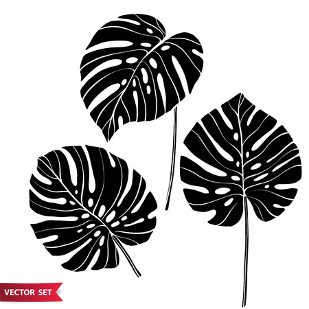 Set of tropical elements. Monstera silhouette leaves collection. Jungle monochrome design elements. One color floral elements for design.