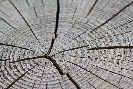 Wood Crack Stock Photo - 7268820