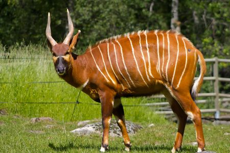 circuses: Antilope Eye Contact Stock Photo