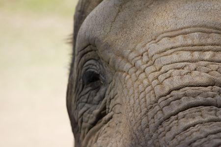 circuses: Elephant Upfront
