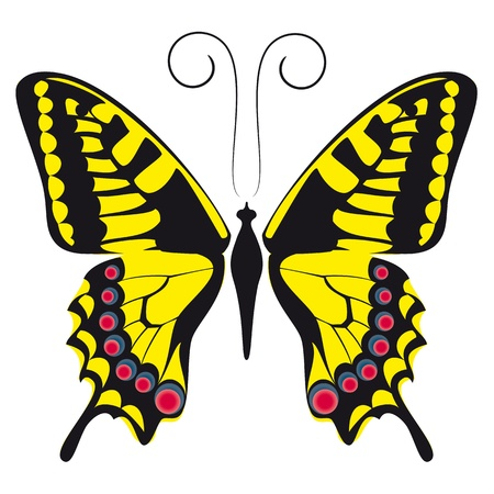 monarch: Illustration of a yellow butterfly with a beautiful pattern on the wings.