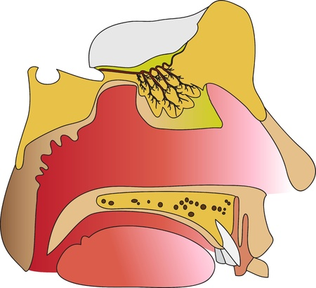 The device of the humans olfactory  Section