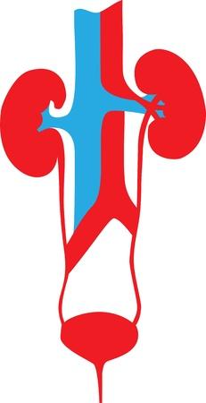Los riñones Sistema Urinario Ilustración del cartel