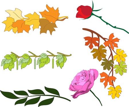 laurel branch: Set of floral elements
