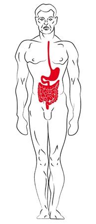 Contour illustration male figure. Profile, frontal, rear view. 1 Stock Vector - 13578811
