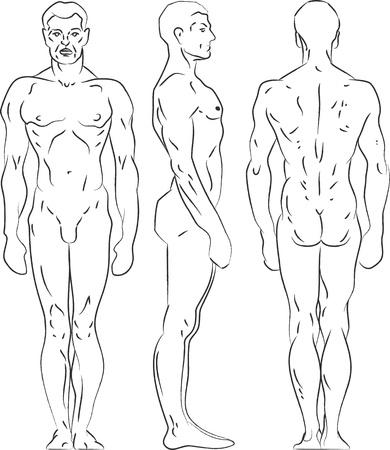 Contour illustration male figure. Profile, frontal, rear view. Stock Vector - 13578814