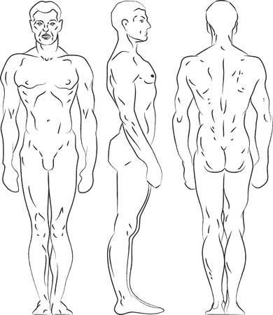 nude male: Contour illustration male figure. Profile, frontal, rear view.