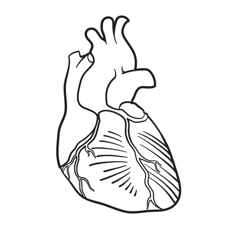 The contour image of a human heart Stock Vector - 23292124