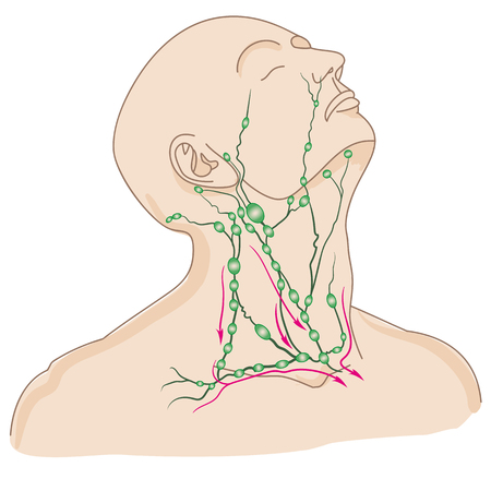 Lymph nodes of head and neck
