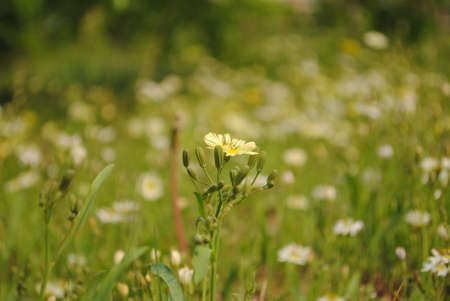 exceeds: loneliness floret, exceeds grassland, Stock Photo
