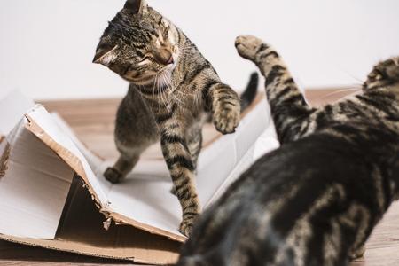 Walka kotów Zdjęcie Seryjne