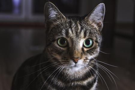 Cat sit on a floor