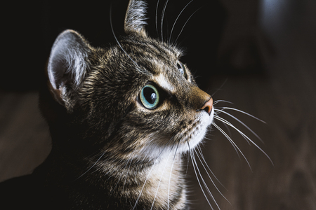 Cat looking on light Reklamní fotografie