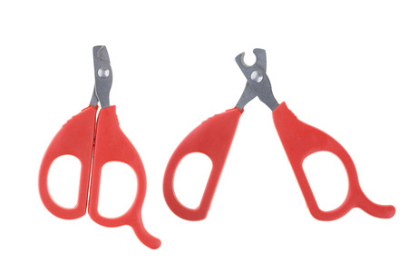 clipper: Nail clipper for pet isolated on white background