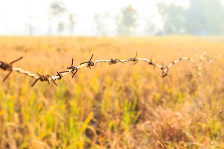 Barbed Wire around Farmland in Sunrise photo