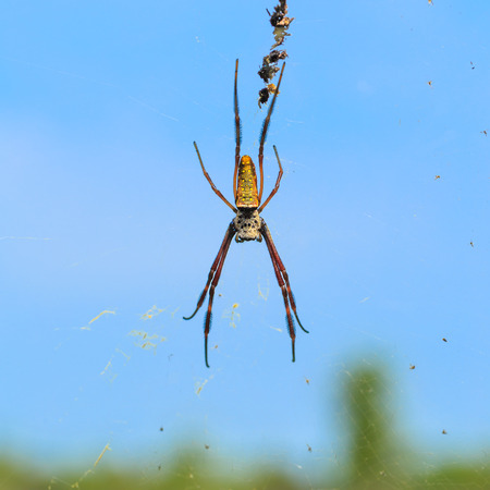 Spider on cobweb and several baits with blue sky, green plants background