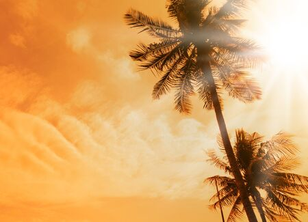 Silhouette of coconut palm trees along the beach and sea with sun highlight sky and clouds background in summer orange tone