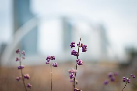 Little flower at Song-do new city in Korea Stock Photo