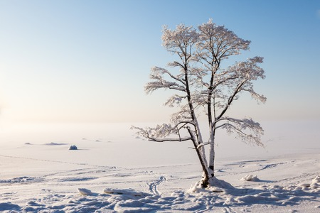 Lonely frozen tree, winter bay, blue sky photo