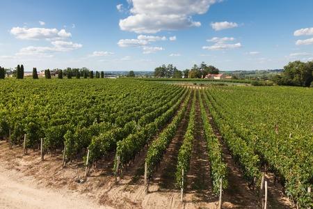 Weinberge von Saint Emilion, Bordeaux in Frankreich Standard-Bild - 35504368