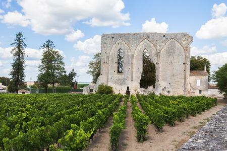 saint emilion: Vineyards of Saint Emilion with ruined church, Bordeaux, France