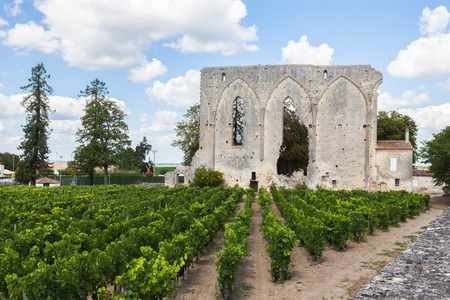 Vineyards of Saint Emilion with ruined church, Bordeaux, France