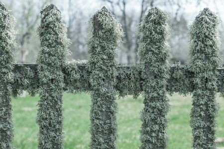 Old wooden fence with moss photo