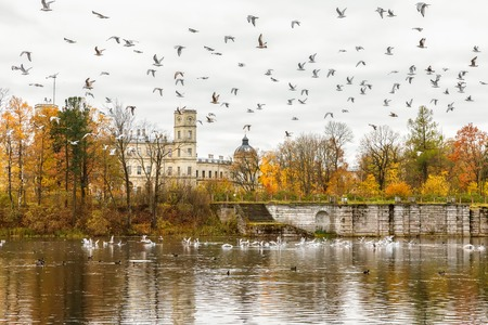 residences: GATCHINA, SAINT PETERSBURG, RUSSIA - OCTOBER 16, 2016: The Great Gatchina Palace in autumn, a large number of seagulls flying. Gatchina Palace was one of the favourite residences of Imperial family