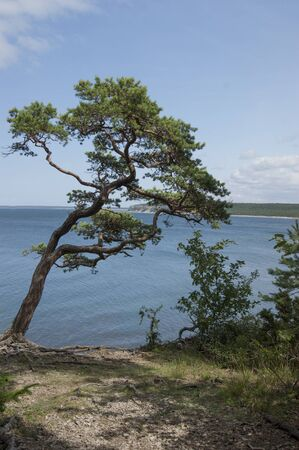 cliff edge: View from a cliff edge
