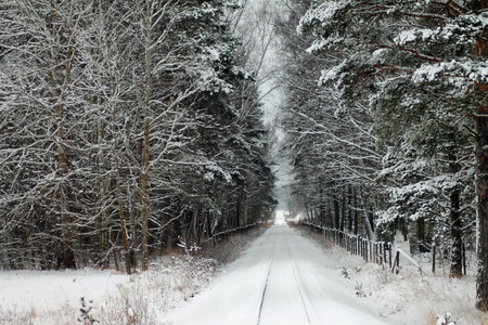 wood railroad: A railroad in to the wood
