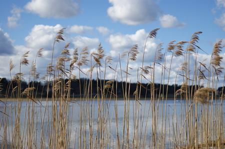 ance: Un lago dietro le canne Archivio Fotografico