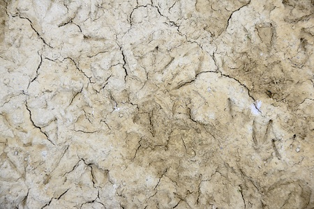 texture of land Stock Photo - 12472996