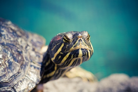 turtle closeup Stock Photo - 12473352