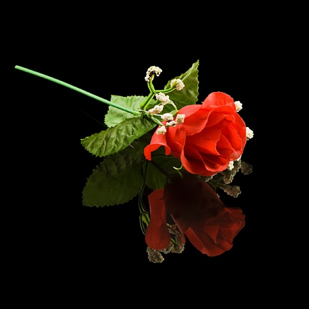 red rose isolated on reflective black background