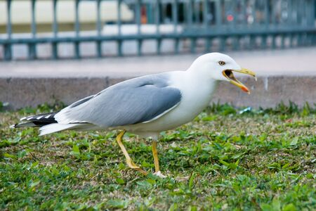 seagull in a park photo