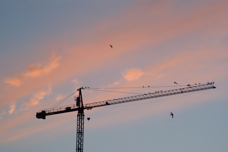 crane at sunset photo