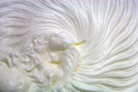 Whipped cream photo