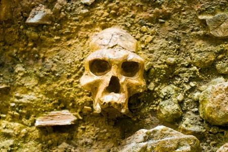 Human skull in a stone wall Stock Photo