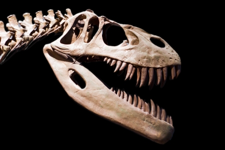 extinction: dinosaur skeleton on black background Stock Photo