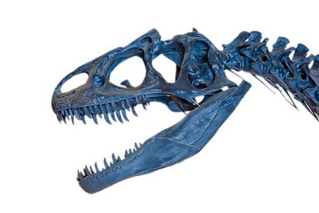dinosaur skeleton on white background photo