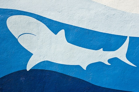 shark in sea painted on wall  photo