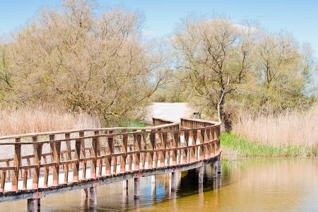 wooden bridge in Tablas de Daimiel in Spain, natural park photo