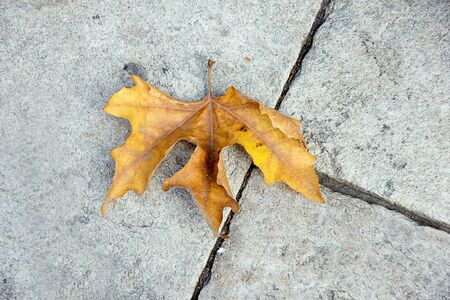 autumn leaf photo